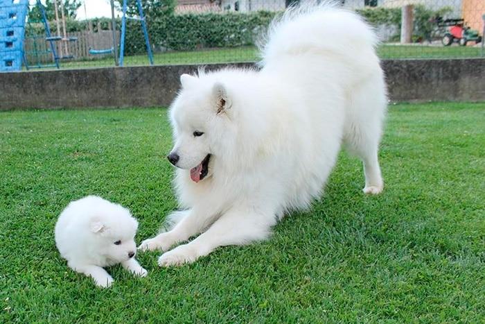 Cachorro mais bonito do mundo