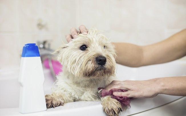Como usar o butox para dar banho no cachorro
